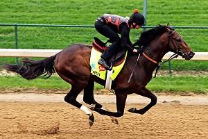 horse_a_orb_cr_300